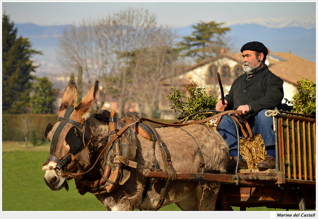 A man using a donkey to pull his wagon