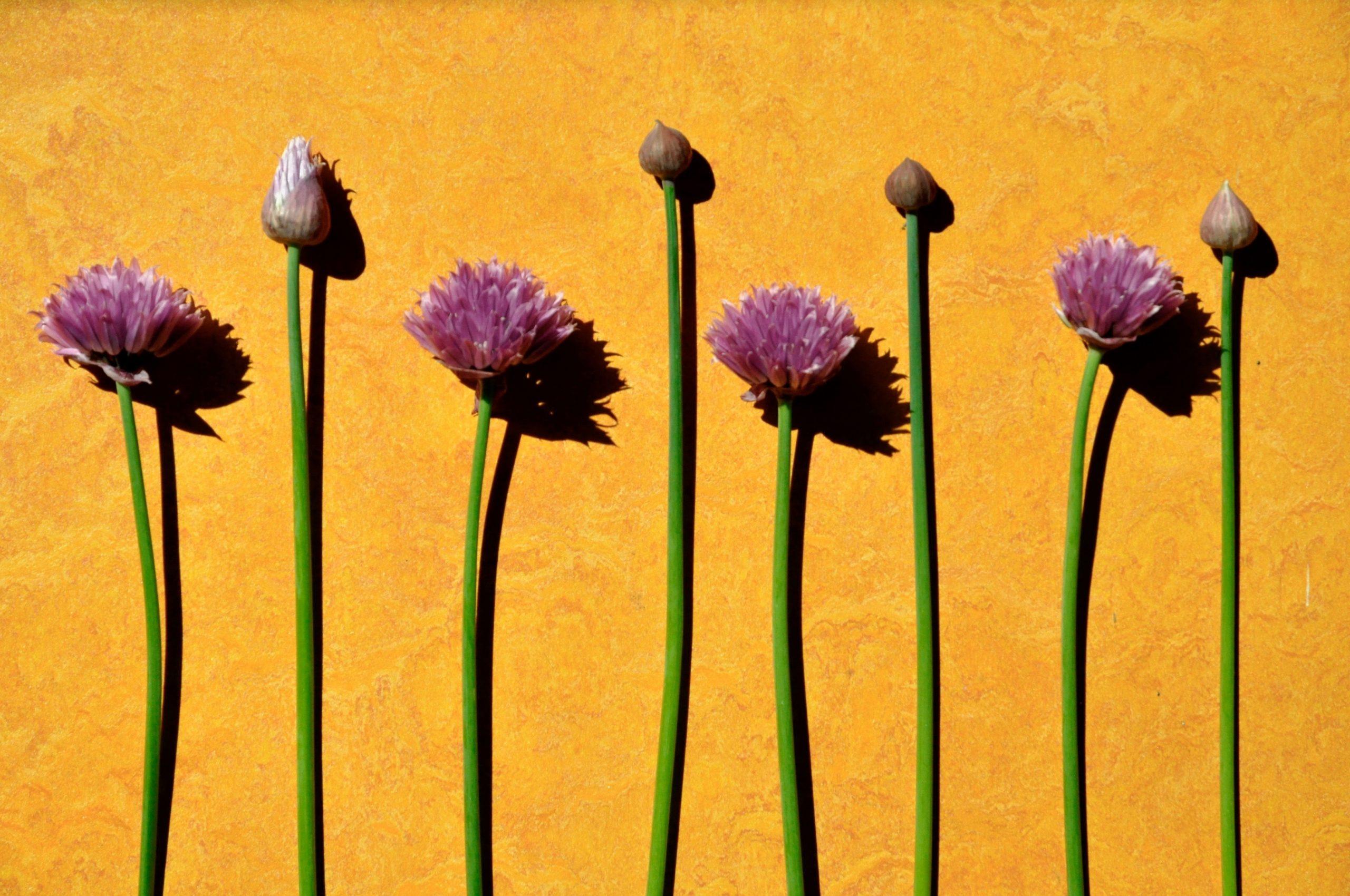 purple flowers in pattern